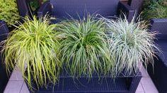 www.evercolorplants.com