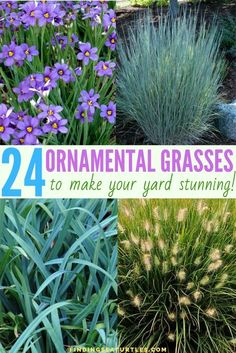 Looking for plants to help with garden issues, think about Ornamental Grasses. Something easy to grow and maintain? Plants with year round interest. 24 Ornamental Grasses To Make Your Yard Stunning Ornamental Grasses For Shade, Ornamental Grass Landscape, Landscape Curbing, Flower Landscape, Landscape Design, Landscape Grasses, Landscape Architecture, Full Sun Landscaping, Pool Landscaping Plants