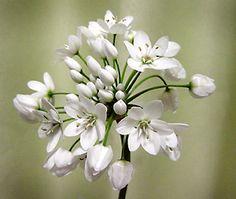 ~Hiroの庭で咲く草花と写真~Hiroの庭で咲く季節の花と写真♪山野草・バラ・果樹・花木・多肉・草花いっぱい!寄せ植え・ハンギング・リース制作いたします!!このブログ内の写真等の著作権は全て管理者にあり営利・販売目的の無断転用・転載は禁じ