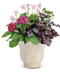 This early spring container garden created by Proven Winners contains Columbine, Wood Spurge, Coral Bells, and Primrose. Container Plants, Container Gardening, Flower Seeds, Flower Pots, Early Spring Flowers, Coral Bells, Shade Flowers, Spring Awakening, Heuchera