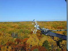 Investigadores de la Universidad de Harvard encontraron que los bosques de todo el mundo, en las últimas dos décadas, son cada vez más eficientes en la forma en que utilizan el agua, incitados por los crecientes niveles de CO2 en la atmósfera.