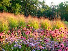 Introduce sensory elements into your garden with whispy perennial plantingschemes - GARDEN IDEAS AND DESIGN BLOG - HORNBY GARDEN DESIGNS ™ - FULL-SERVICE GARDEN DESIGN CONSULTANCY - GARDEN DESIGNERS IN SHROPSHIRE - SHREWSBURY - UK