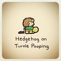 hedg hog on turtle pooping Sweet Turtles, Small Turtles, Tiny Turtle, Cute Turtles, Turtle Love, Pet Turtle, Baby Turtles, Cute Turtle Drawings, Animal Drawings