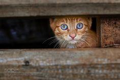 cat by V_Rogachev #animals #animal #pet #pets #animales #animallovers #photooftheday #amazing #picoftheday