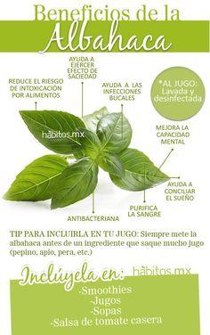 Beneficios de Aceite de Albahaca