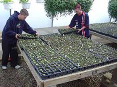 Self Watering Wicking Bed Ibc Beds With A Few