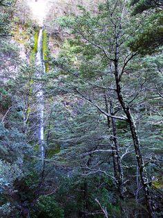 Dog Stream Waterfall - Canterbury, New Zealand