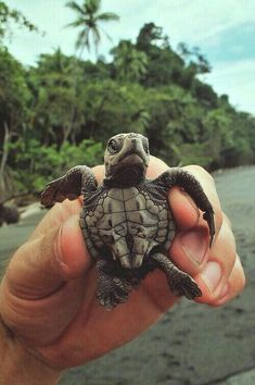 Cute i love it turtle cuteness