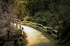 Lighted path in Muir Woods, California