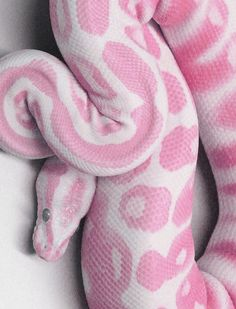 pink snake. If this were real ( it might be) I would own it. I dont care how much snakes freak me out