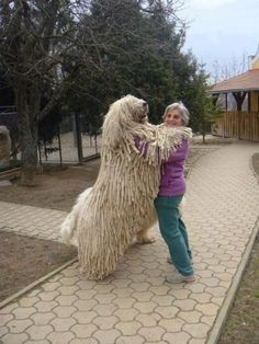 The Komondor is a large, white-colored Hungarian breed...I may have to draw the line on this!!!!!!!