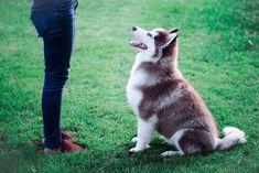 Noi de I Miei Animali abbiamo preparato una guida in modo che sappiate cosa potete insegnare al vostro cane in base alla sua età.