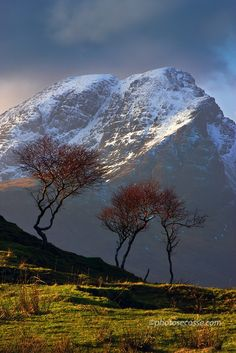Fotografia Blaven and Birch Trees. Isle of Skye. Scotland. de Barbara Jones na 500px