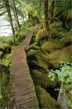The trail to Punchbowl Cove, Misty Fiords National Monument.ALASKA