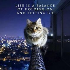 This is such a cool quote with such a cute cat!
