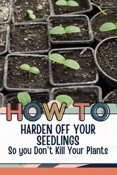 Hardening off your seedlings is a common term that will help your plants flourish in the garden. Check out the tips to help you harden your plants before putting in your garden. Gardening For Beginners, Gardening Tips, Hardening Off Seedlings, Bountiful Harvest, Turkey Sandwiches, Grow Your Own Food, Frugal Tips, Permaculture, Flourish