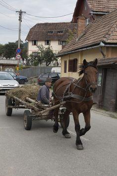 Plaatselijk vervoer in Sibiel Bulgaria, Ponies, Cannon, Equestrian, Countryside, Travel, Animals, Life, Beautiful