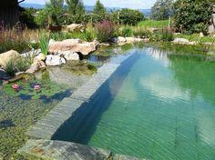 piscine biologique en pleine nature, plantes et pierres naturelles