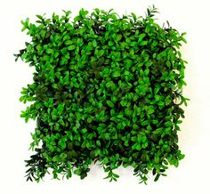 Deluxe artificial buxus panels - ideal for hedge building