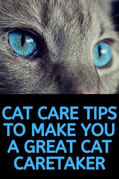 Cat Care Indoors Cat care tips to make you a great cat caretaker and have a kitten and cat that lives a long and happy life. Cat Medicine, Diy Cat Toys, Cat Towers, Cat Care Tips, Buy Pets, Cat Behavior, Cat Facts, Funny Cat Videos, Cool Cats