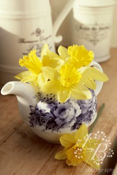 Daffodils in pretty teapot on window sill, spring flowers, Mother's day, Easter. Stock photography from www.lucybarden.co.uk