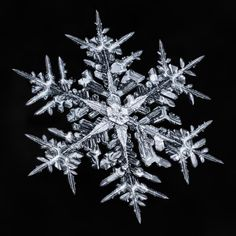 Photographer Spent Hours Capturing Stunning Photos of Complex Snowflakes - Fotoinspiration Nature - Snowflake Photography, Macro Photography, Photography Ideas, Adobe Photography, Winter Photography, Snow Scenes, Winter Scenes, Snowflake Pictures, Images Of Snowflakes
