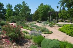Water Efficient Plants From the Fair Oaks Horticulture Center and UC Davis Arboretum