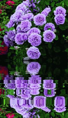 St Therese promise to grant my petition, day one novena purple roses Sept 23rd, 17.