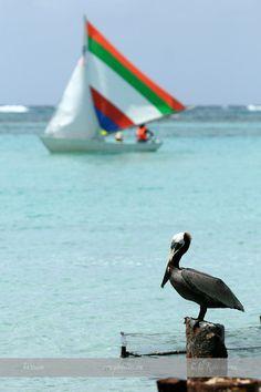 Beach, Guadeloupe