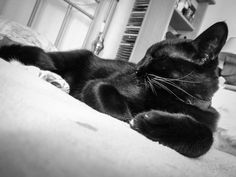 Normally lying down Cat Sleeping, Have A Laugh, Cats, Funny, Animals, Gatos, Animales, Animaux, Funny Parenting