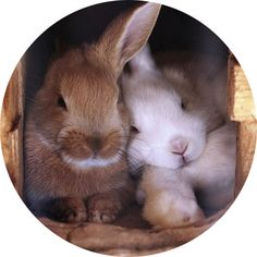 Every bunny needs some bunny to love.
