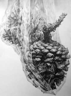 a pinecone 5 by ~indiart3612 on deviantART