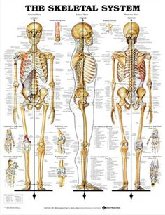 human leg and foot skeleton image | leg and foot actually you can, Skeleton