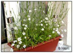 Schmetterlingswiese für den Balkon