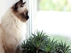 Check out this list of plants that are toxic to cats and dogs to help prevent pet poison.