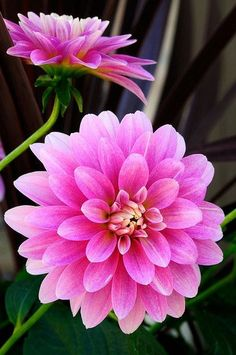 Different Types of Beautiful Flowers_45
