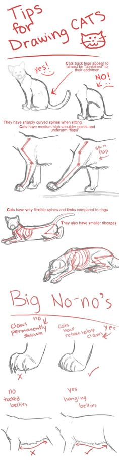 Drawing Cats Tips by Hiedidog                                                                                                                                                     More Click on the link to check out great cat and kitten products at www.bowchickameowmeow.com