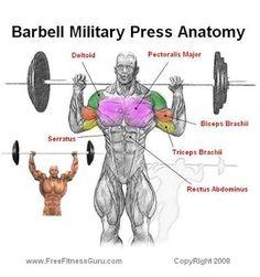 Resultado de imagem para muscles engaged in push ups