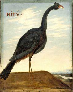 Mitu mitu, by Albert Eckhout Books To Buy, Jaguar, Bird, Alchemist, Animals, Birds, Wayfarer, Painters, Animales