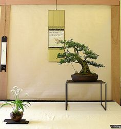 Bonsai Art, Bonsai Garden, Bonsai Trees, Traditional Japanese House, Japanese Style, Asian Bedroom, Shoji Screen, Japan Architecture, Japanese Interior Design