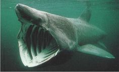 sharks mouth - Google Search