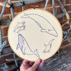The whale hoop It's orcas, a southern right whale and a humpback whale - stitched in various shades of blue. I wanted to make their relative sizes accurate which is why the lil orcas are much smaller. I'd say it's almost correct but some artistic license was used Available in my Etsy store for only $45AUD ‍♀️ #makersmovement #modernembroiderymovement #textileart #threadpainting #craft #diy #textile #handembroidery #handstitched #embroideryhoop #hoopart #etsyseller #etsy #girlpea...