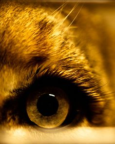 Photography by Michael Patrick O'Leary (via Breathtaking Close-Up Portraits of Wild Animals - My Modern Metropolis)
