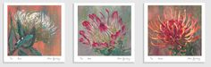 The Prettiest Protea Paintings and Prints