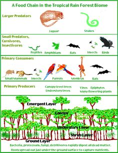 Rainforest Biome follow the link by clicking on the image for a complete lesson