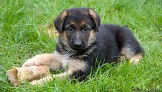 Good dog :-)