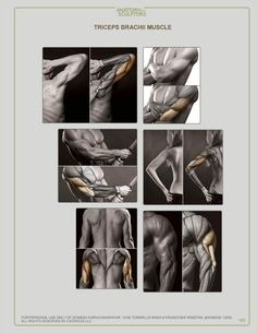 Exceptional Drawing The Human Figure Ideas. Staggering Drawing The Human Figure Ideas. Drawing Male Anatomy, Human Anatomy Drawing, Human Body Anatomy, Human Figure Drawing, Anatomy Study, Guy Drawing, Anatomy Reference, Anatomy Back, Gross Anatomy