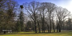 DAG 70: IN THE WOODS, ARNHEM Project 4.12.365 #photography #fotografie #nature #woods #arnhem
