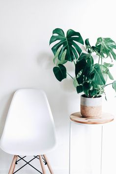 Caring For Monstera Deliciosa The Zen Succulent Monstera Deliciosa, Faux Philodendron, Cheese Plant, Easy Care Plants, Pot Plante, Tree Artwork, Perfect Plants, Lilac Flowers, Purple Lilac