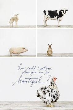 How could I eat you when you are so beautiful? This made me think of you @Laura Potts